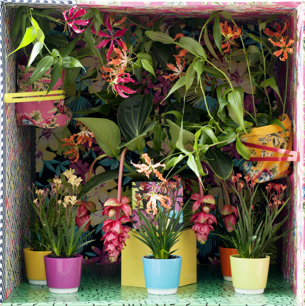 May 2016 Blooming Tropical Plants Houseplants Of The Month Flower