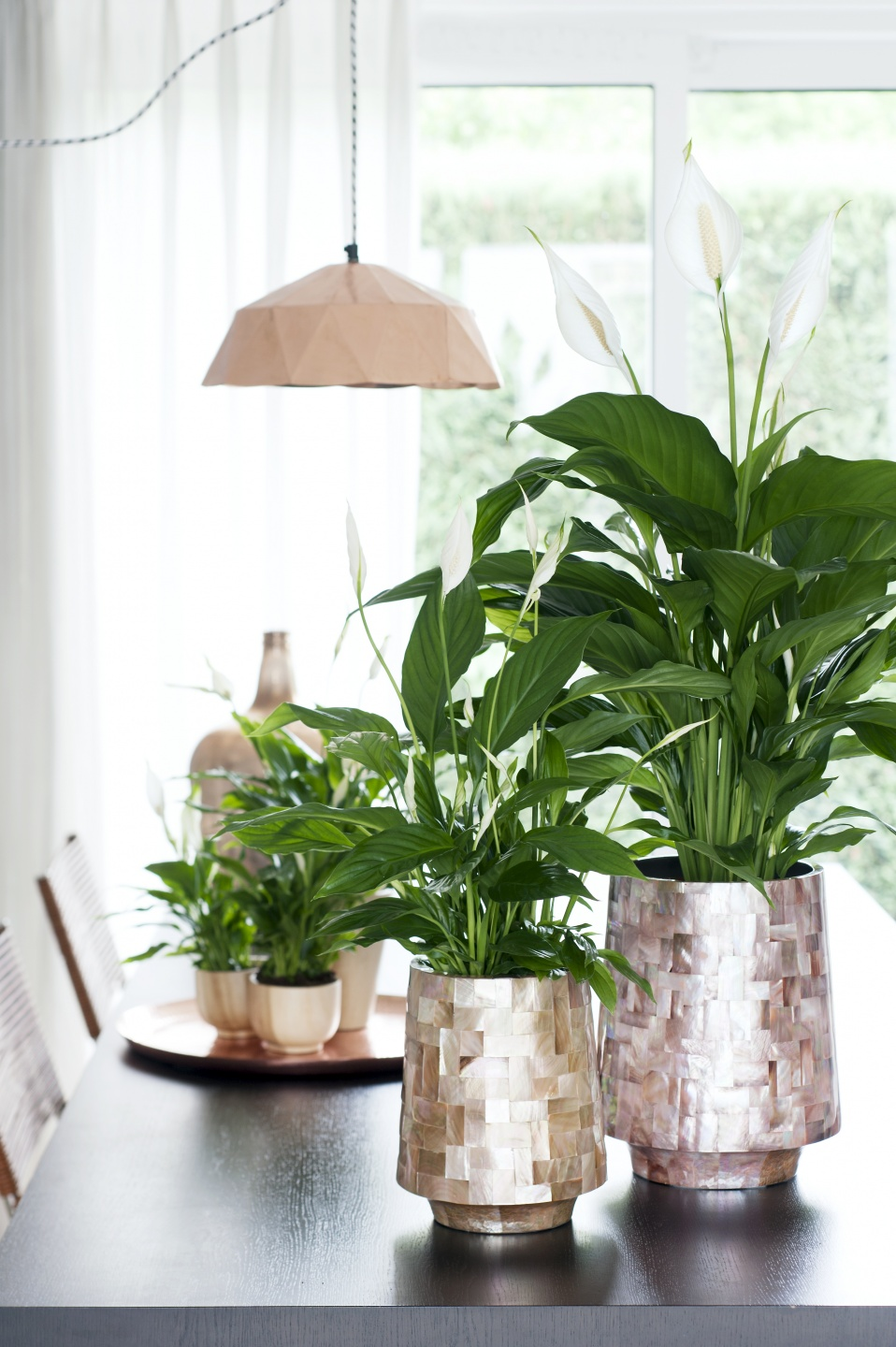 Peace Lily Houseplant Of The Month Of June Flower Council