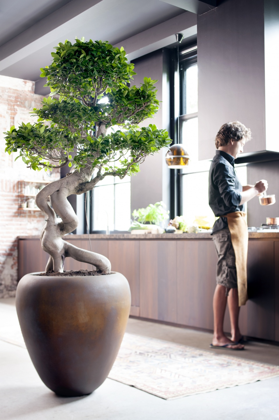 July 2015 The Ficus Ginseng Is Houseplant Of The Month Flower Council