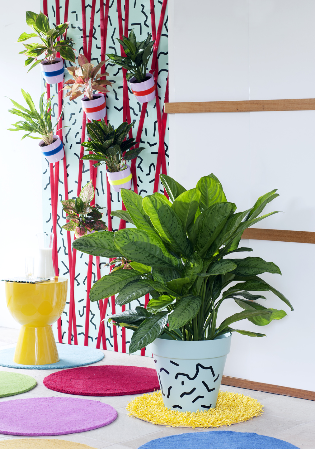 October 2016: Chinese Evergreen is Houseplant of the month ... on chinese evergreen watering, red chinese evergreen plant, chinese evergreen leaf, japanese evergreen plant, snake plant, chinese evergreen bamboo, chinese money plant, chinese evergreen seeds, chinese evergreen crete, chinese evergreen tree, chinese evergreen indoor plant, chinese potted plant, chinese fan palm california, wandering jew plant, english ivy plant, chinese evergreen aglaonema, chinese evergreen flower, chinese evergreen leaves turning yellow, chinese flowers and plants,