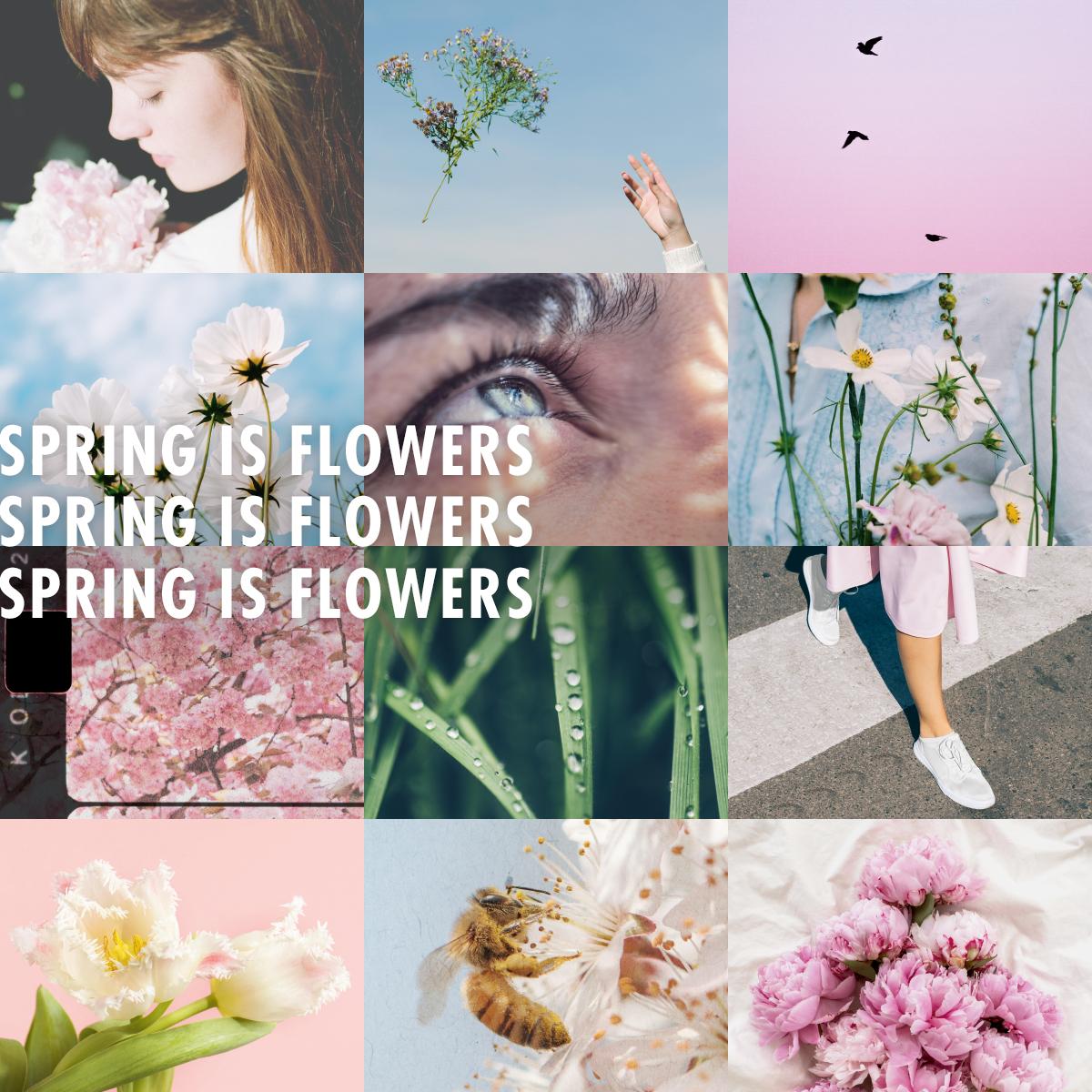 Spring is flowers - Funnyhowflowersdothat