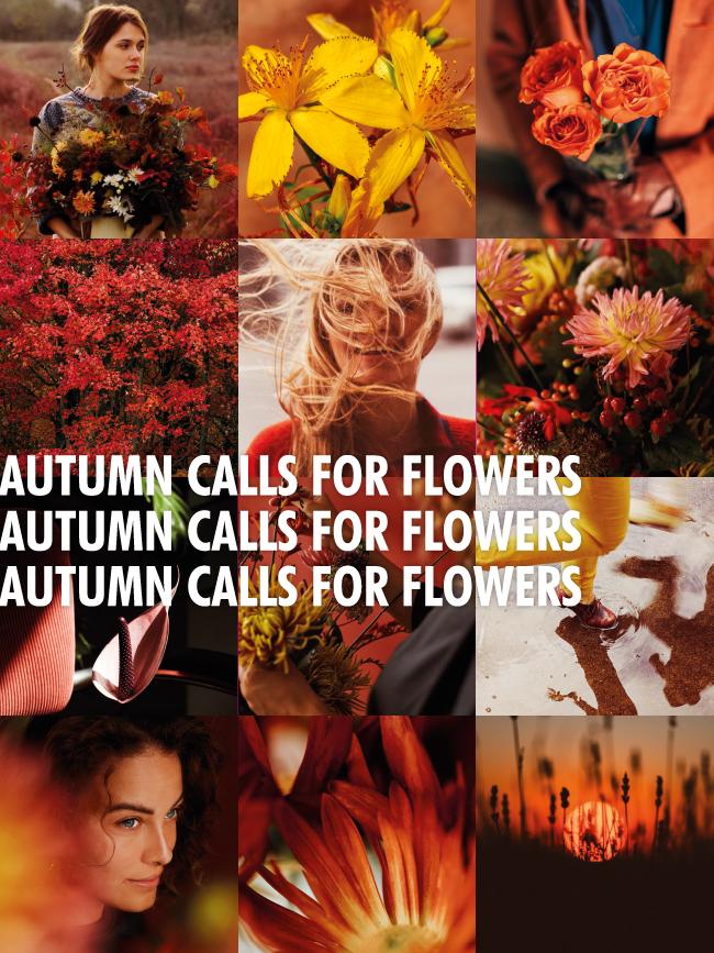 Autumn calls for flowers