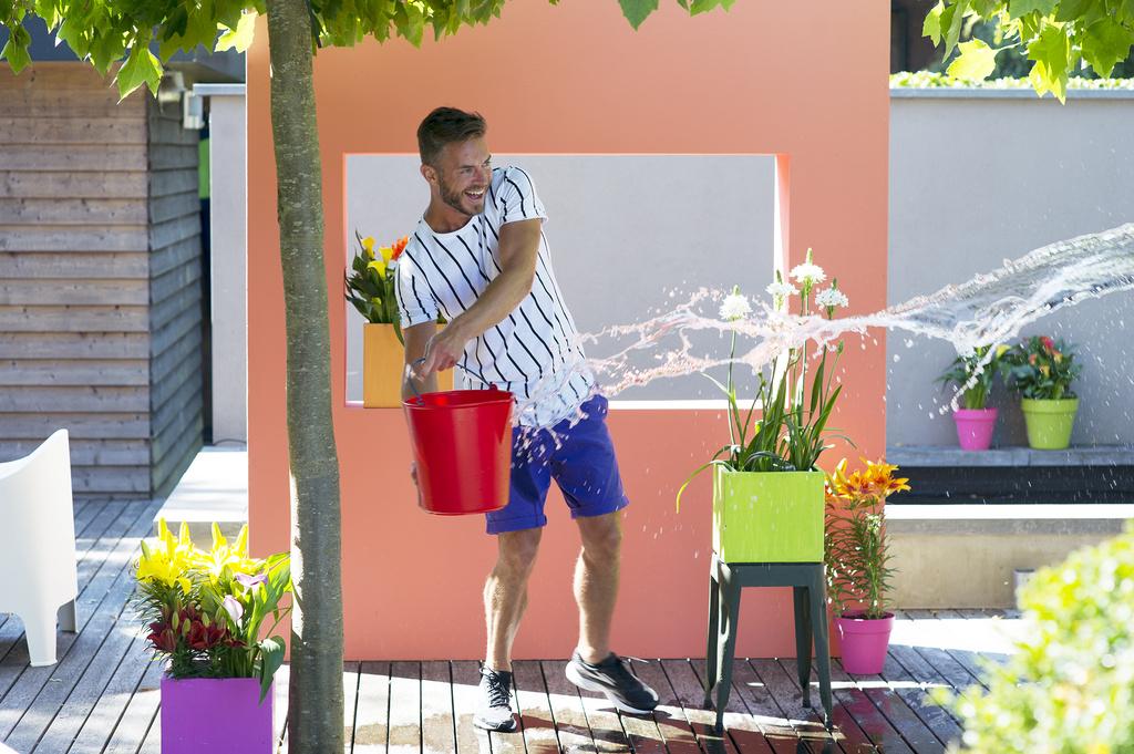 Tuinplant van de Maand juli: Zomerbollen-op-pot (Zantedeschia, Lelie en Ornithogalum)