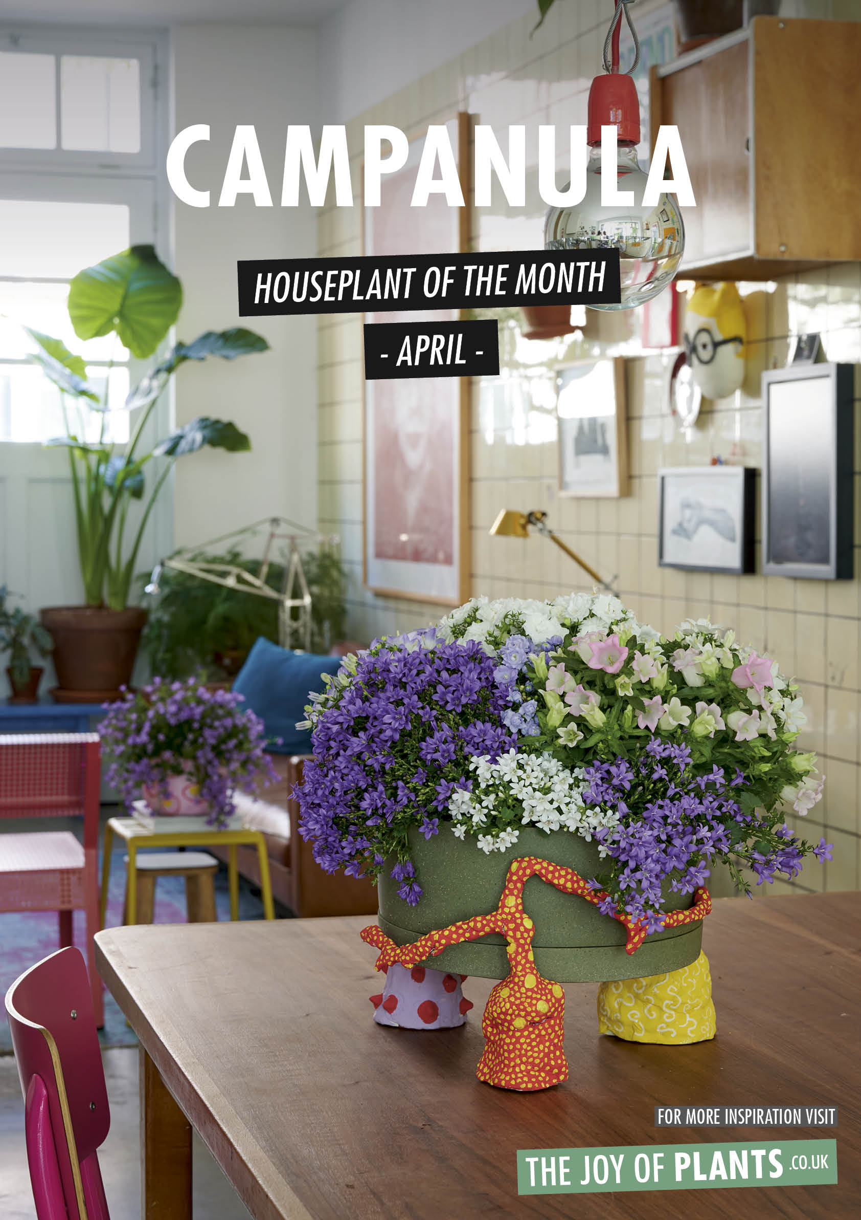 Campanula: Houseplant of the Month April 2020