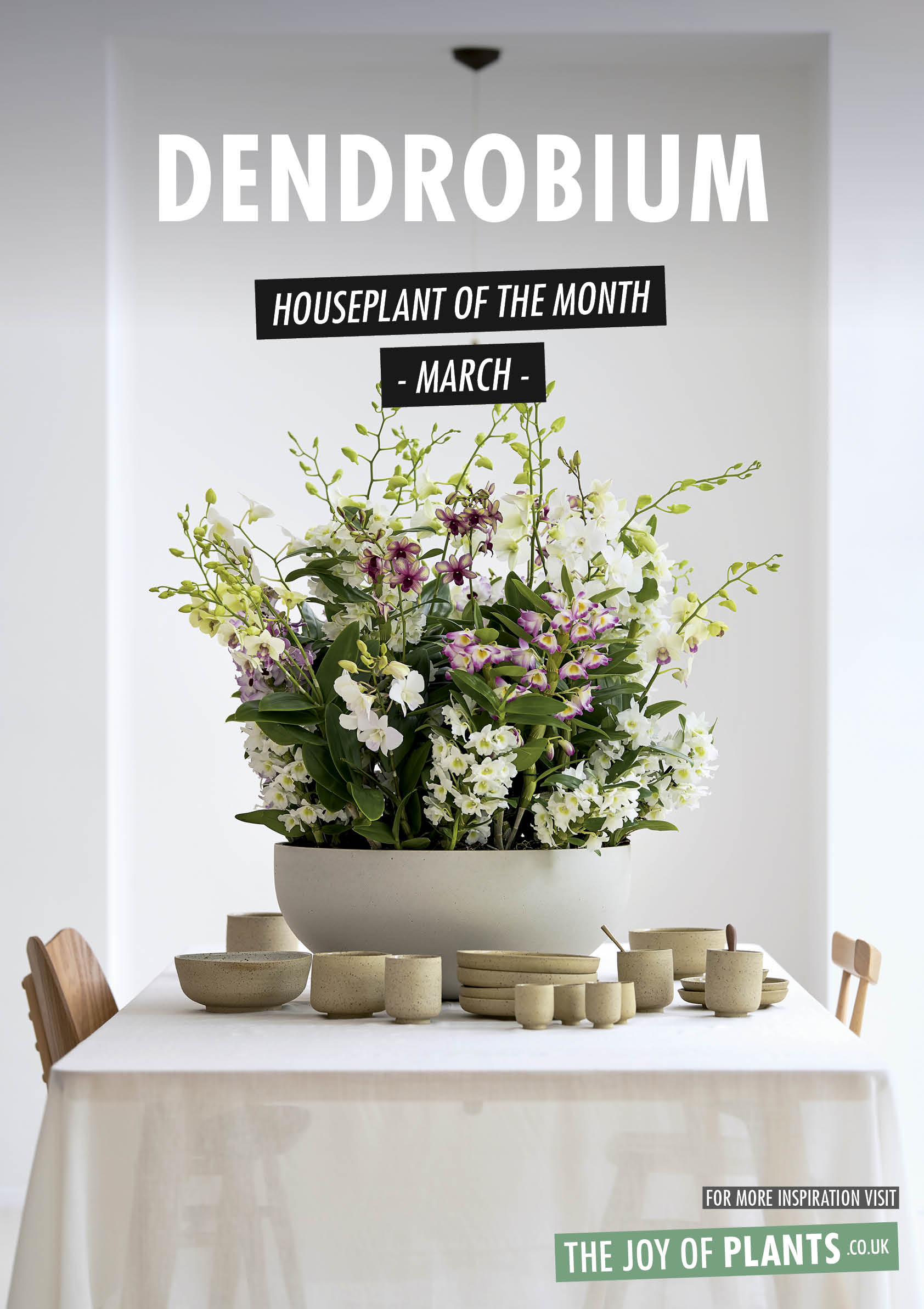 Dendrobium: Houseplant of the Month March 2020