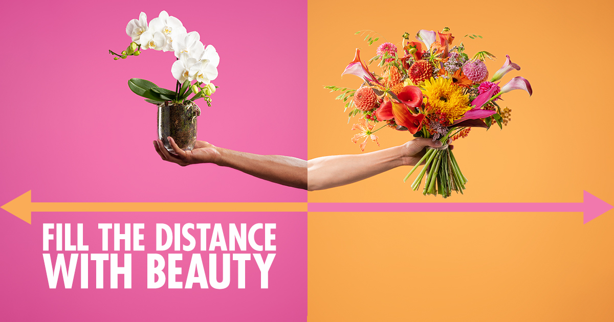 Fill the distance with beauty campaign key image