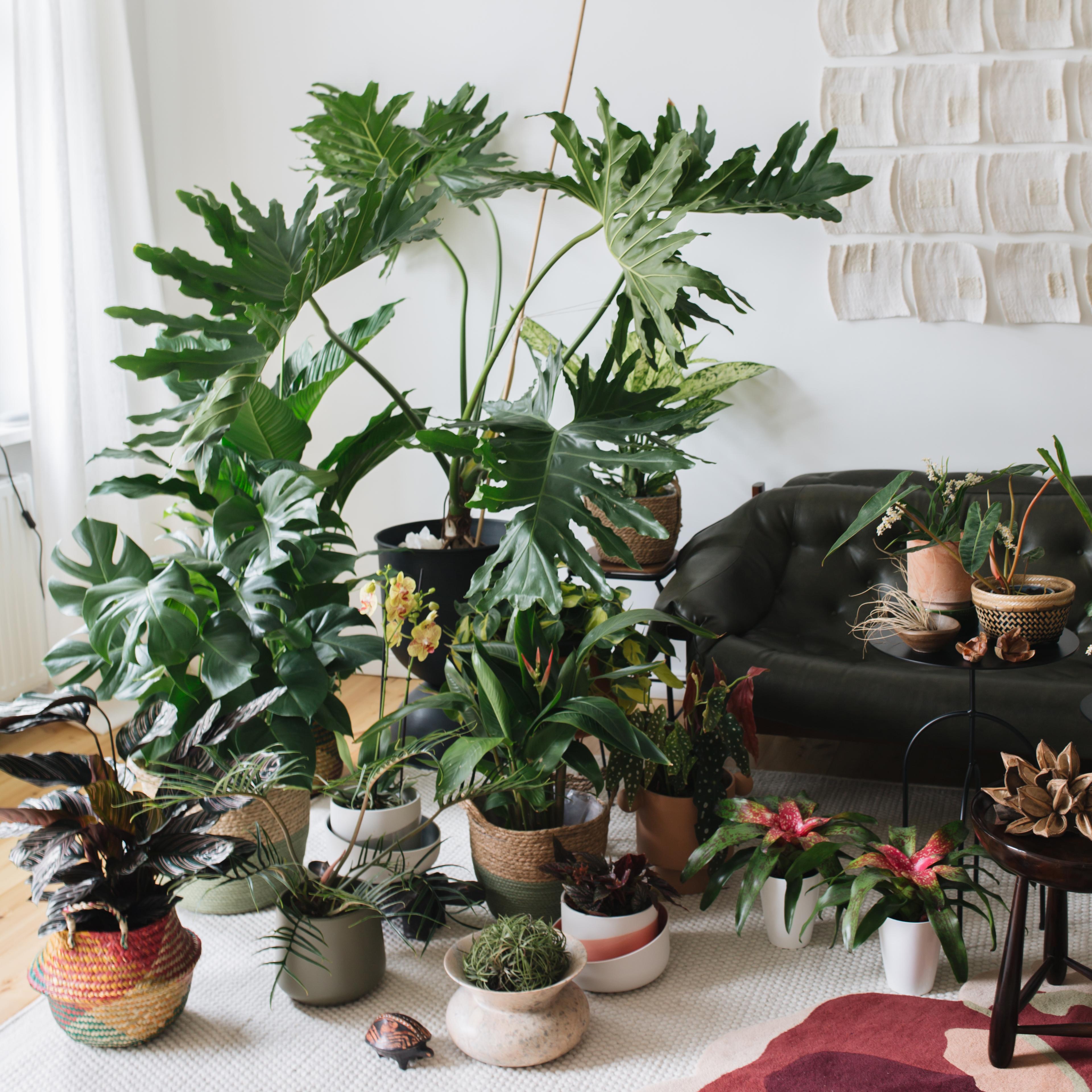 Houseplant Travel