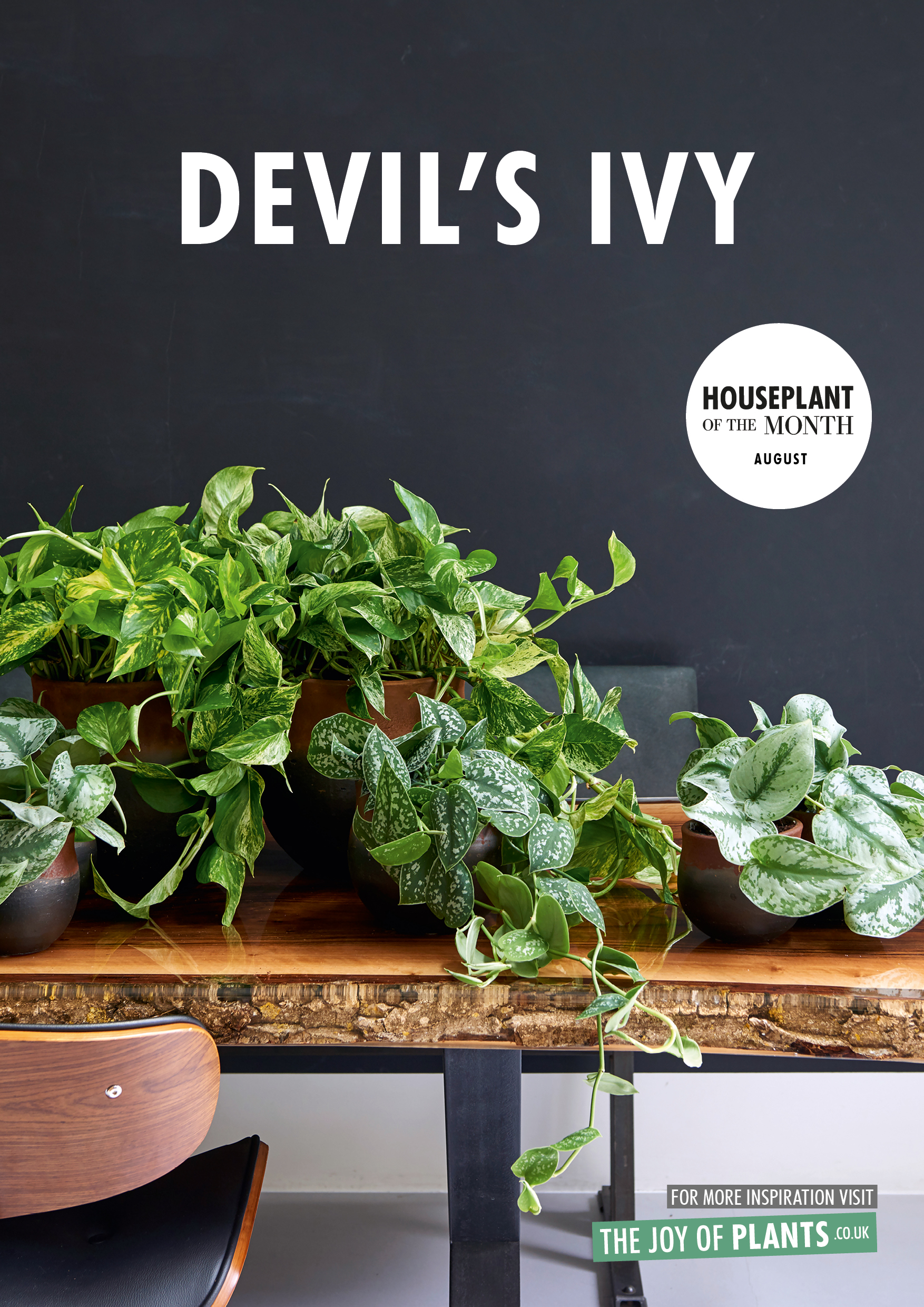 August 2018 Devils Ivy Houseplant Of The Month Flower