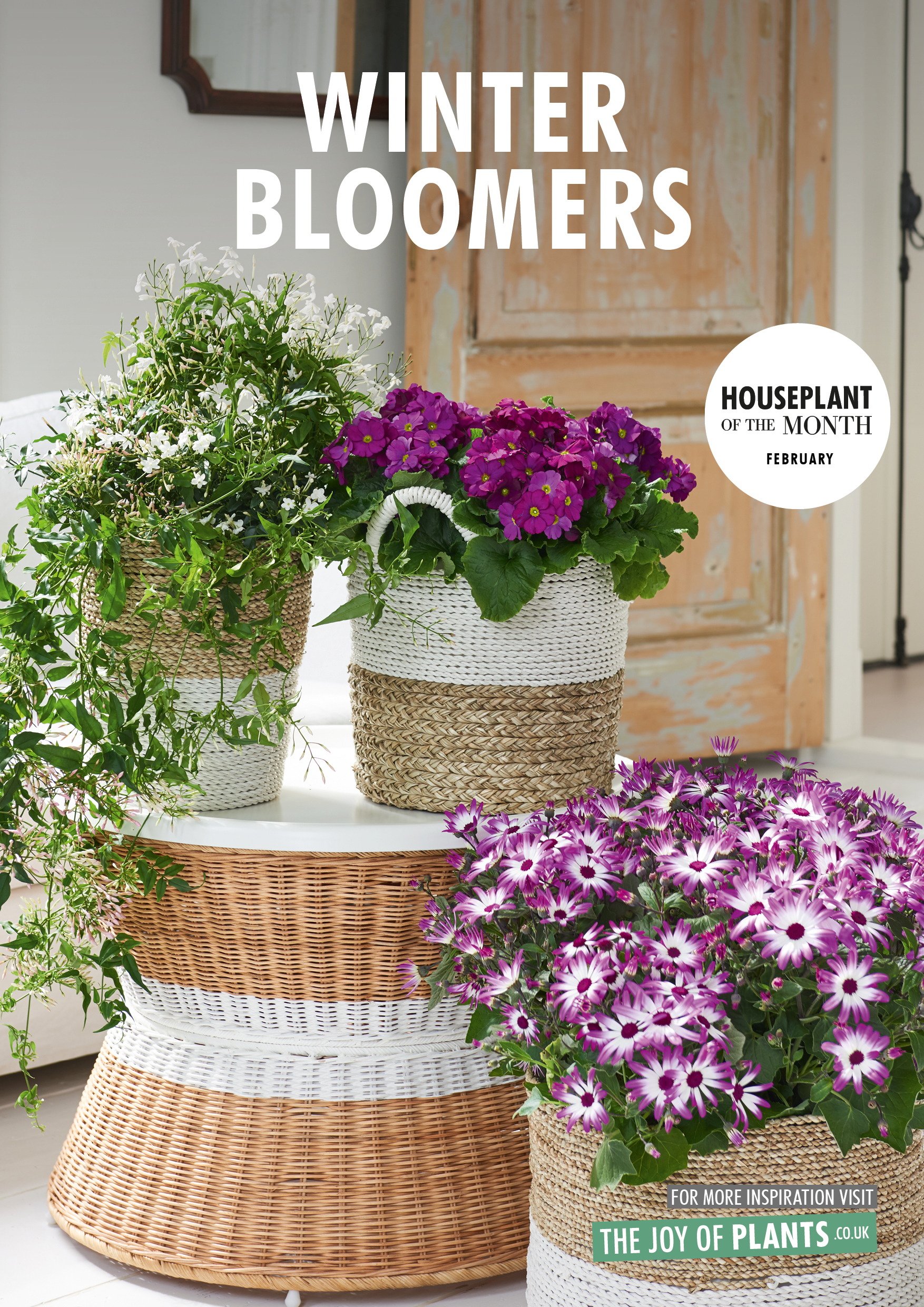 February 2018: Winter bloomers  Houseplant of the month