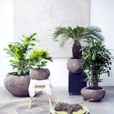February 2017: specialty palms  Houseplants of the Month