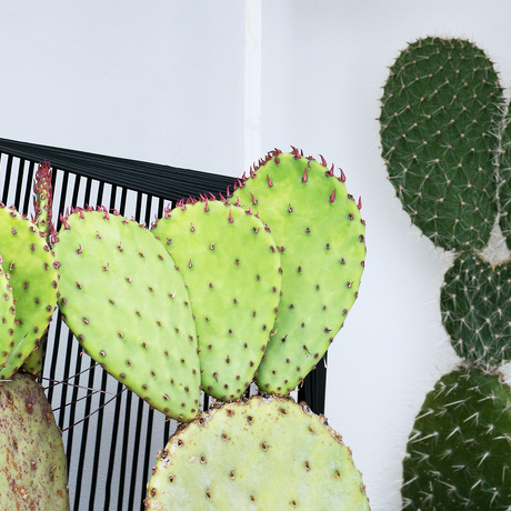 Cacti -August 2016 Houseplant of the Month