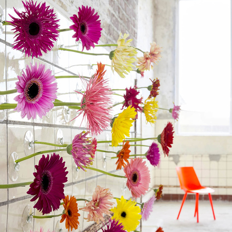 The gerbera is on the Flower Agenda in April
