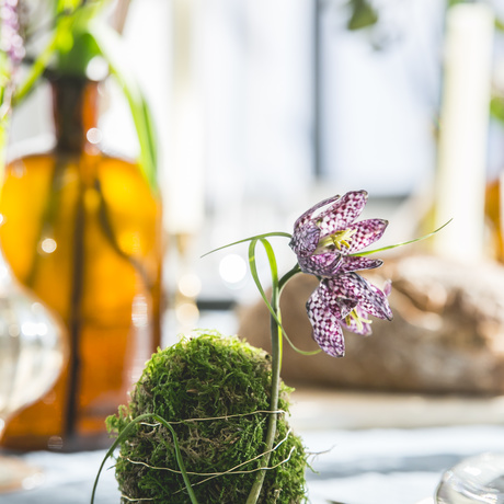Celebrate Easter with flowers and plants