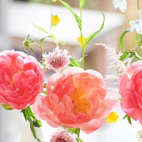 The peony: in the June Flower Agenda