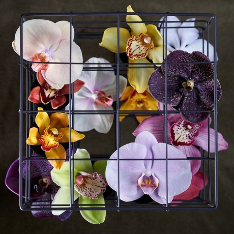 Orchid: in the November Flower Agenda