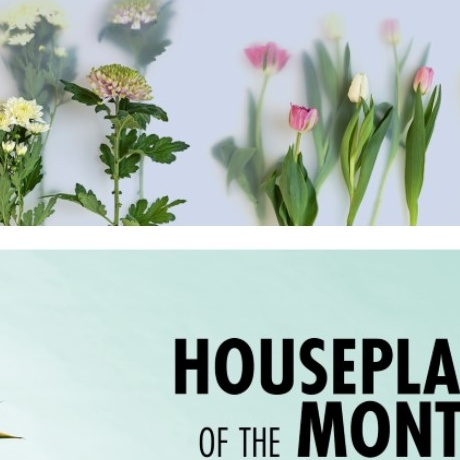 Houseplant of the Month & Flower Agenda 2020
