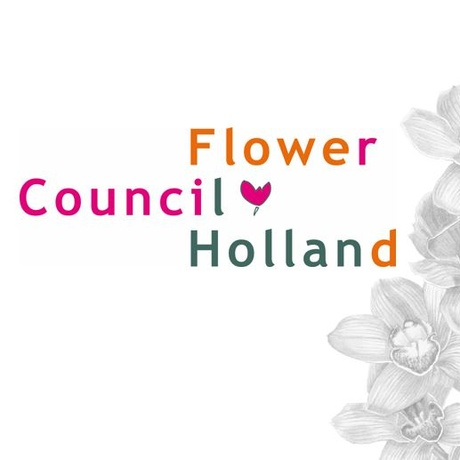 Flower Council of Holland reviews promotion plans