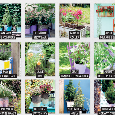 Garden plants of the Month 2016