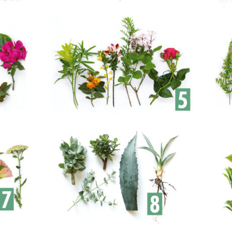 Garden Plant of the Month 2019