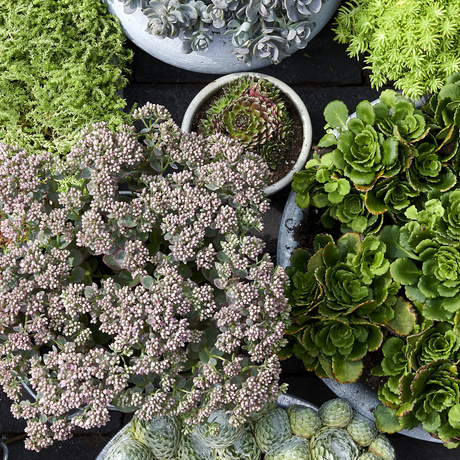 Green Covering: October Garden Plants of the Month 2019