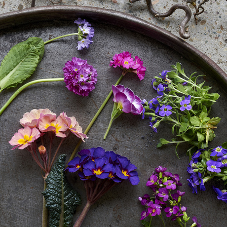 Garden Plants of the Month February: Spring Surprises