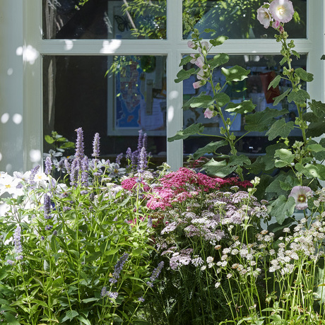 Bee Friends: Garden Plants of the Month for July 2019