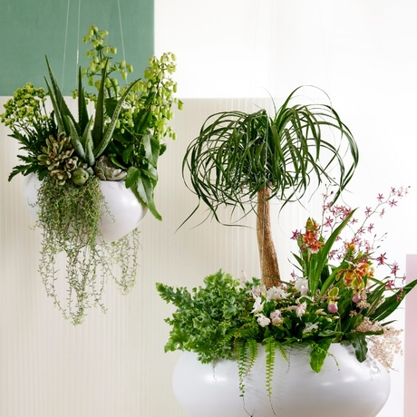 The houseplants in The Trend Collection