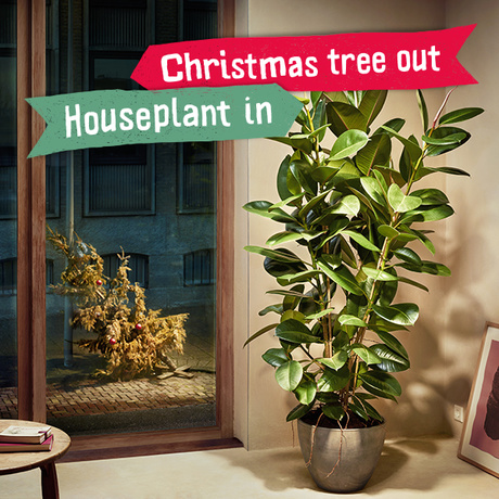 Christmas tree out, Houseplant in!