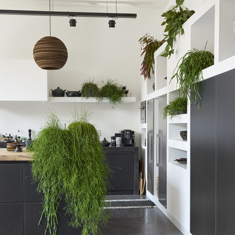 November 2018: Rhipsalis  Houseplant of the month