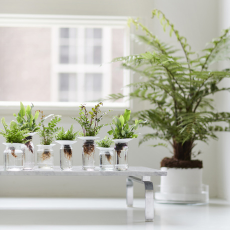 Ferns: February 2019 Houseplants of the Month