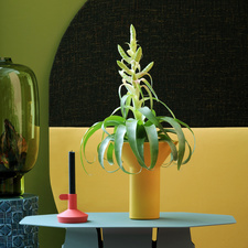 March 2017: Bromeliads Houseplant of the Month