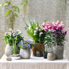 In & Out Plants Houseplants of the Month May 2017