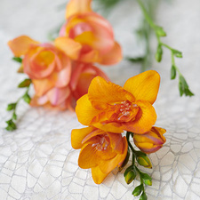 The freesia is in the Flower Agenda in February