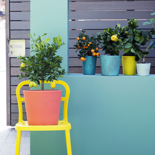 Garden Plant of the Month for March: Citrus trees