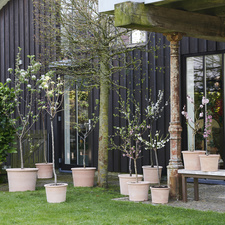 Blossom Trees: March Garden Plants of the Month