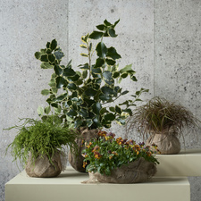 The garden plants from The Trend Collection autumn/winter 2021