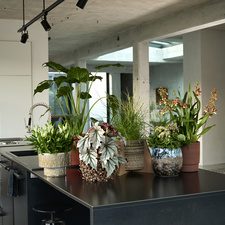 The houseplants from The Trend Collection autumn/winter 2021