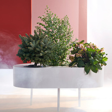 The garden plants in The Trend Collection