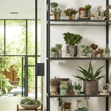July 2018: succulents  Houseplant of the month