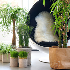 October 2018: Pet-friendly plants Houseplant of the month