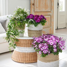 February 2018: Winter bloomers  Houseplants of the month
