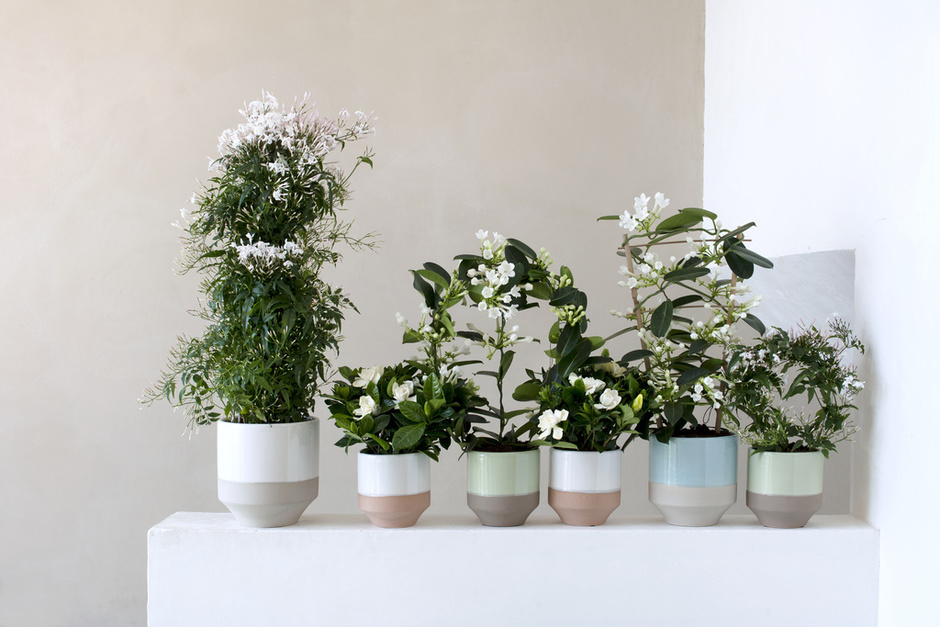 March 2016 White Fragrant Plants Are Houseplants Of The