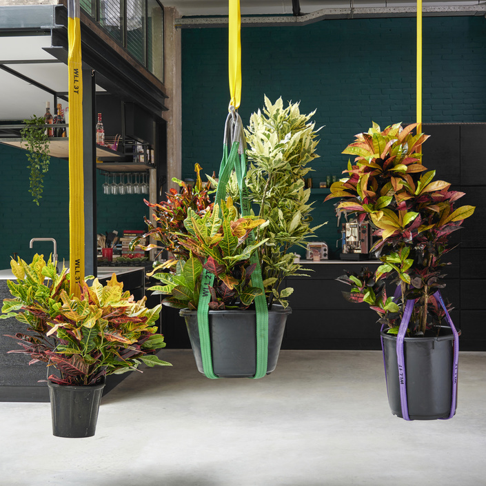 Croton: the Houseplant of the Month for October 2020