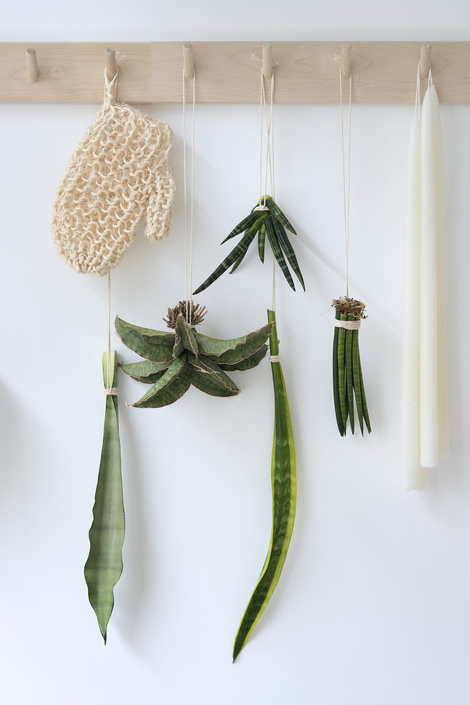 Sansevieria: the Houseplant of the Month for November