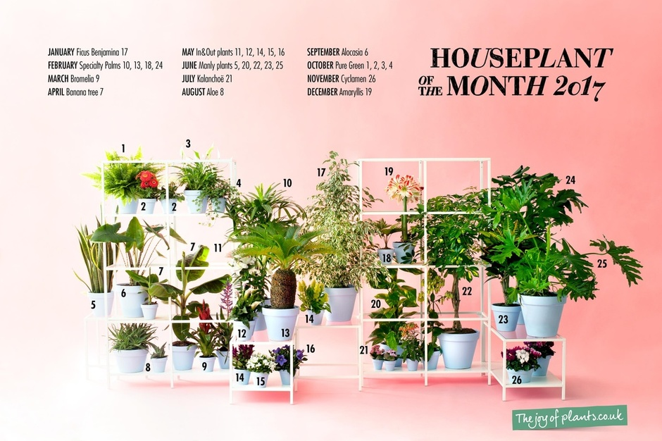 The Houseplants for 2017 have been announced