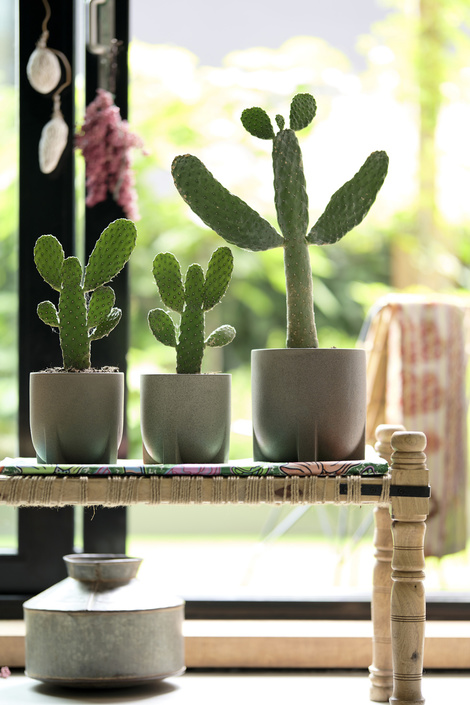 Cacti: the Houseplants of the Month for August 2020