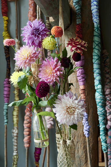 The dahlia is on the Flower Agenda in August