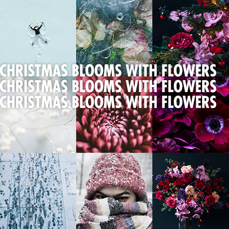 Christmas blooms with flowers -Funnyhowflowersdothat.co.uk