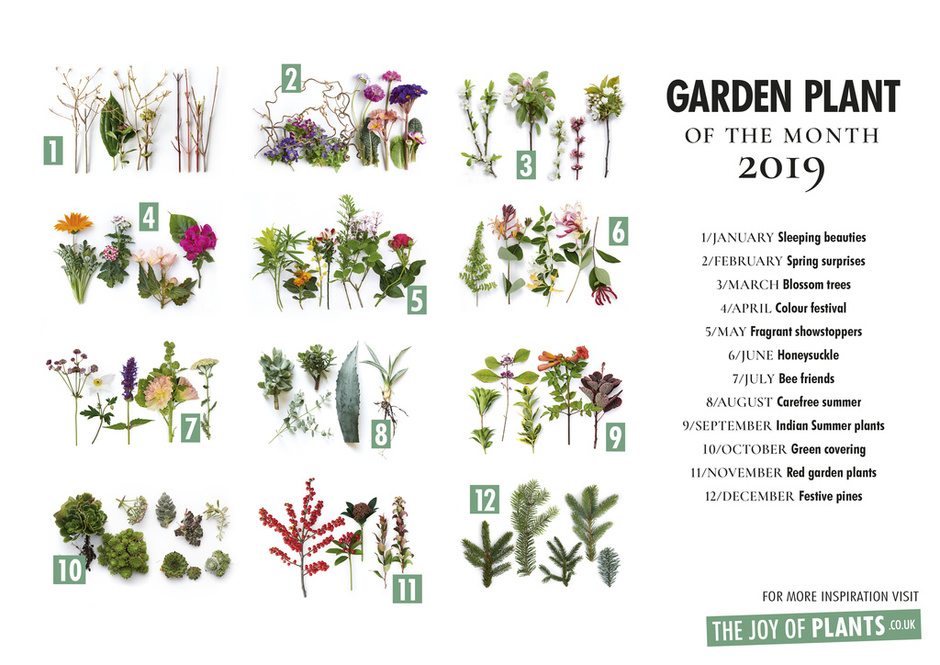 Garden Plants of the Month 2019