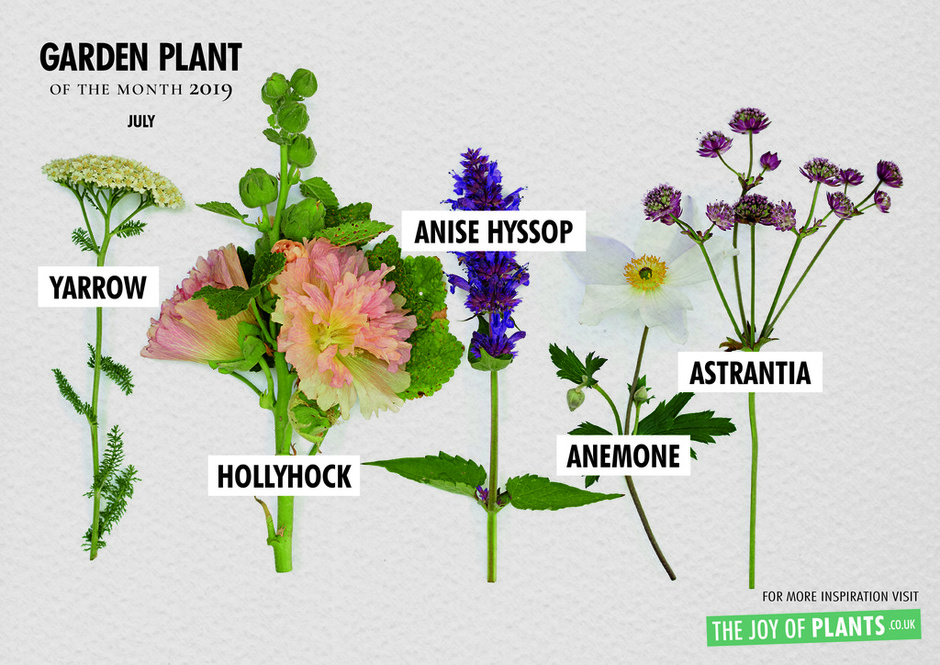 Bee Friends: Garden Plants of the Month for July Overview